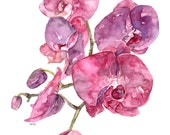 Pink Orchid Print - Paint...