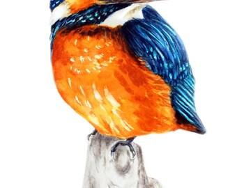Kingfisher Art Print, Bird Painting, kingfisher Bird Art Watercolour Painting Nature Print Wall Art Garden Gift Bird Illustration Home Decor