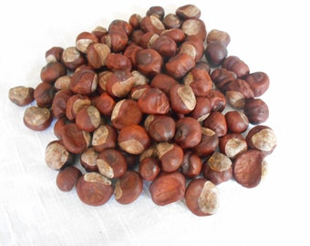 Real Horse Chestnuts Buckeyes Natural  Craft Supply Collection of 25