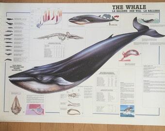 Loisirs créatifs affiche graphique baleines baleine bleue affiche 27 x 39 fabriqué en Italie