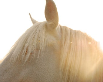 "Horse photography white dreamy cream vanilla beige spring animal print - ""Le cheval blanc""  8 x 10"