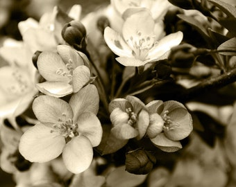 Sepia Photography, Flower Print, Cherry Blossom Wall Art