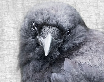Crow Close Up Portrait, Meaningful Look, Photograph - Signed Fine Art Print by June Hunter, Crow Lover Gift