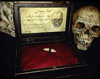 Dente di Vampiro in scatola wunderkammer - Vampire's tooth in wunderkammer wood box