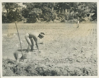 India young man planting rice vintage photo
