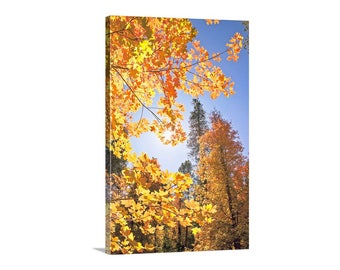 Fall Leaf Print, Fall Photography, Autumn Leaves Art, Catalina Mountains, Autumn Gift, Nature Photography, Vertical Print, Canvas Art