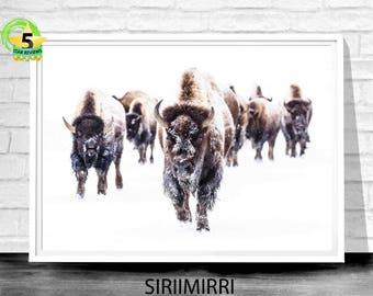 Buffalo Print, Bison Print, Nursery Print, Highland Cow Print, Animal Print, Nursery Poster, Buffalo Poster, Bison Wall Art, Animal Poster