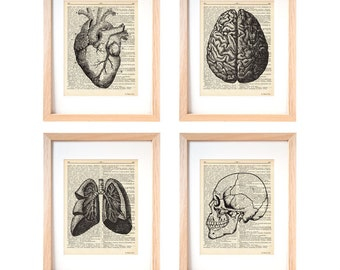 Anatomy print set of 4-anatomy dictionary prints-home decor-anatomy print-medical print-gift for doctor-Christmas gift-by NATURAPICTA-DP131