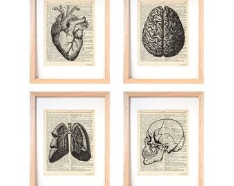 Anatomy print set of 4-anatomy dictionary prints-home decor-anatomy print-medical print-gift for doctor-Christmas gift-by NATURAPICTA-DP131