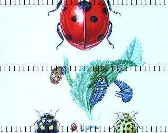 Scan digital ladybugs Entomology Scan ladybug beetles entomology vintage image