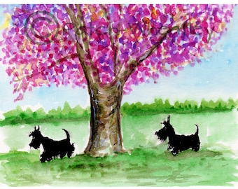 Scottie Dogs Art Print or Greeting Card Scottish Terrier's #69 'Cherry Blossom'