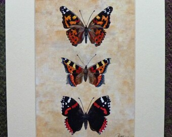 Butterfly Painting Butterfly Picture Butterfly Wall Art Butterfly to Frame Butterfly Decor Butterfly Artwork - A pretty trio a gorgeous gift