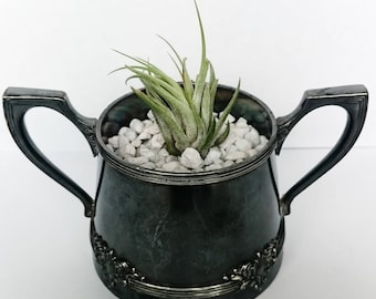 Danielle Bowl Tillandsia Planter