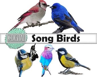 Song Bird Clipart - Bird Clip Art, Swallow Clip Art, Sparrow Clip Art, Mockingbird Clip Art, Songbird Clip Art, Vector Clip Art, Warbler