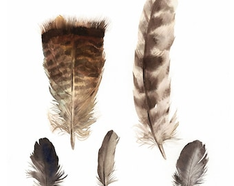 """feathers painting, watercolor, art, wall, decor, earth tones, """"Found Feathers no. 2 """" Large Archival Print"""