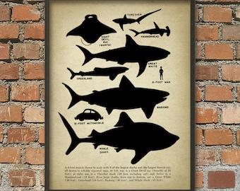Shark Educational Wall Art Poster - Shark Size Comparison Chart - Marine Home Decor - Nautical Wall Art - Great White Shark Poster