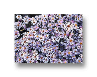 Purple Daisies, Flowers, Art Print, Printable Art, Digital Art, Instant Download, Wall Decor