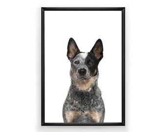 Australian Cattle Dog Print, Dog Prints, Australia Print, Blue Heeler Print, Instant Download, Large Printable Poster, Digital Download