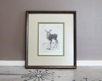S M Coulthard 1973 Artist Proof Minutes Old Deer Etching Deer Engraving Woodland Art Doe Art Fawn Alaskan Artist