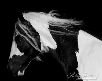 Dark Gypsy - Fine Art Horse Photograph - Horse - Black and White - Fine Art Print  - Gypsy Vanner