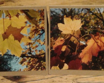 Pack of 2 Greeting Cards