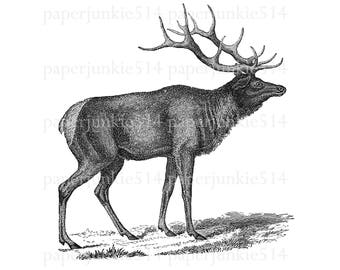 Elk Printable Clip Art  - Elk - FFF - Digital Download - JPG - PNG Image - Illustration