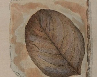 "1790-1810.Antique print ""Forms of PETRIFIED LEAVES""Geology.Fossils.Copper engraving.Colored by hand.By Bertuch.9.9x7.8"" or 25,5x20 cm"