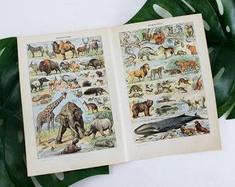 Affiche Animal Vintage, Vintage estampes, Animal Art Print, Illustration Animal Print, impression Dictionnaire Français, Antique tirages E366 affiche -