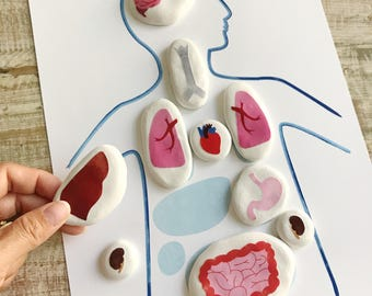 Montessori Internal Organs Matching Game DOWNLOADABLE PDF