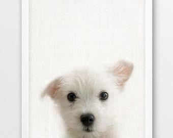 Dog Puppy Print, Animals Photo, Nursery Animal Wall Art, Domestic Cute Little Dog Print, Color Photo Print, Kids Room Printable DIY Decor