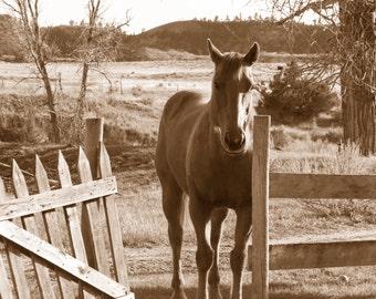 Horse in Montana   P-28