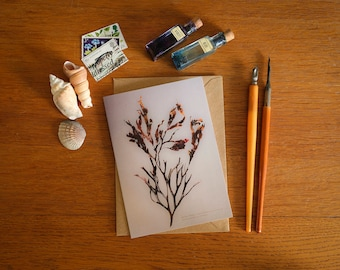 Spiral Wrack Seaweed Card - A6 greeting card - beautiful coastal art card