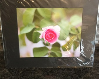 Rose 8x10 matted