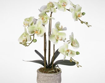 Real Touch Green Phaelaenopsis Orchids in Concrete Pot #112