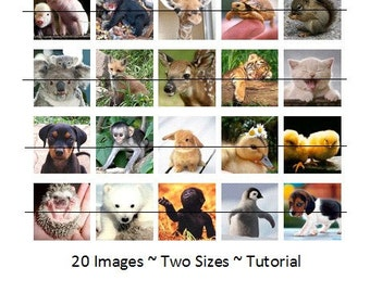 Baby Animals- DIY Scrabble Tile Images- 20 Images via Email