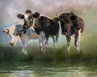 Cow Art. Fine Art Photographic Print. Farm Animals. Farmhouse Decor. Rustic Decor for Home or Office