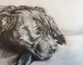 Custom pet portrait using pencil and charcoal