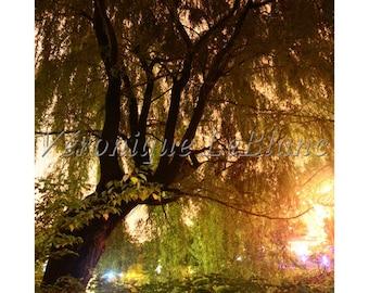 Magic of the Botanical Garden lanterns