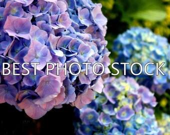 Purple Flowers Background Photo Stock | Digital Image | Business Promotion
