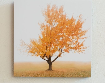 Season of Shaw Tree Fall-b  Print 5x7 8x10 Standout 10x10 12x12