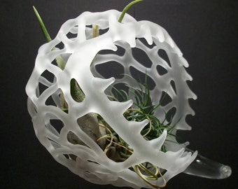 clear, frosted, glass, horned, jaws, air plant terrarium