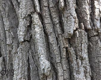Tree trunk texture - digital download