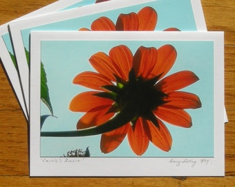 Carole's Zinnia, Photo Art Card