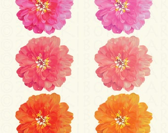6 Dahlia Flower Illustration: Very Realistic Digital Clipart