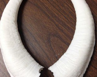 Curled Goat Replica Horns