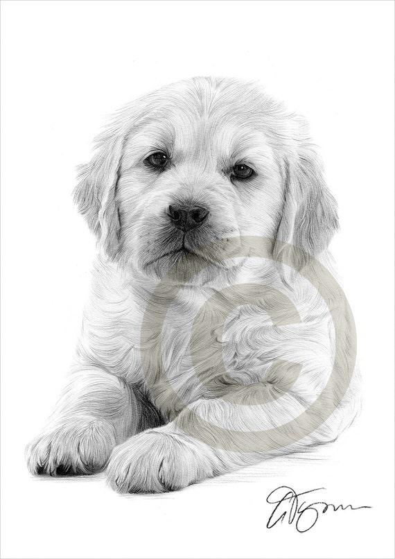 Matita di golden retriever cucciolo cane disegno opera di for Disegni a matita di cani
