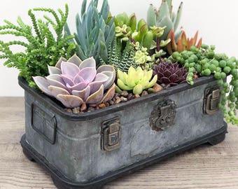 Succulent Arrangement - Succulent Plants - Rustic Trunk