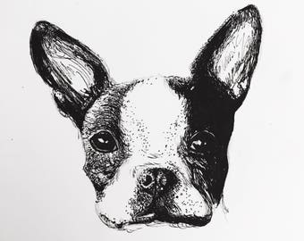 Pet Portrait, Dog Drawing