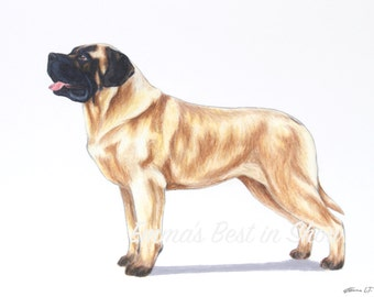 English Mastiff Dog - Archival Fine Art Print - AKC Best in Show Champion - Breed Standard - Working Group - Original Art Print
