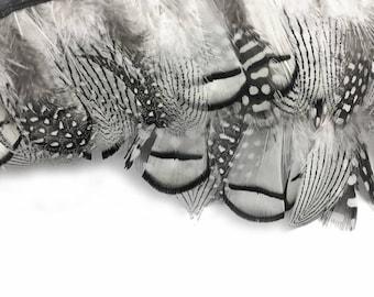 Feather Trim, 1 Yard - Natural Black White Guinea & Pheasant Plumage Feather Trim : 4240